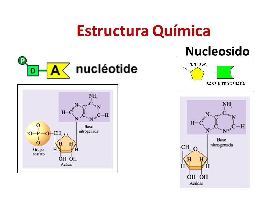 Estructura Química Nucleosido