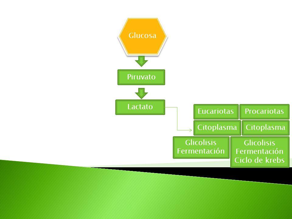 Glucosa Piruvato Lactato EucariotasProcariotas Citoplasma Glicolisis Fermentación
