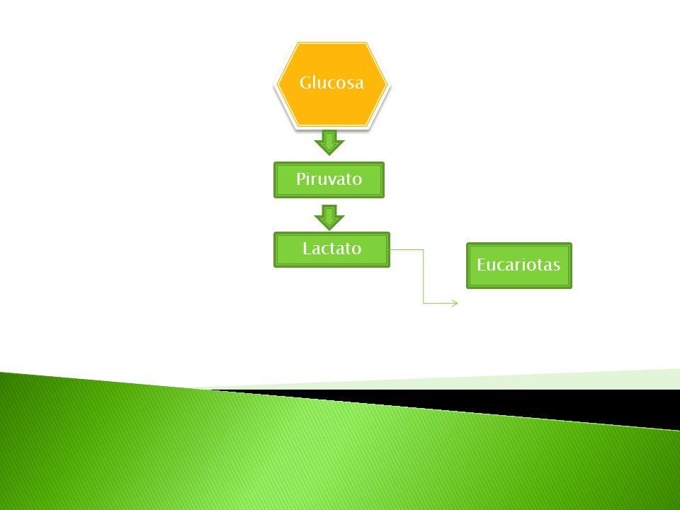 Glucosa Piruvato Lactato