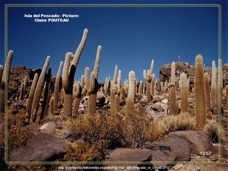 http://commons.wikimedia.org/wiki/File:Isla_del_Pescado_in_Uyuni.JPG Isla del Pescado - Picture: Ricampelo 12/57