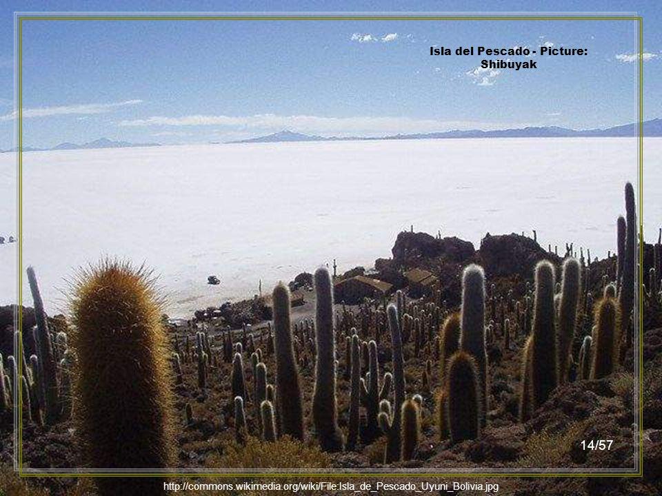 Isla del Pescado - Picture: Claire POUTEAU 13/57 http://commons.wikimedia.org/wiki/File:Isla_del_Pescado_in_Uyuni.JPG