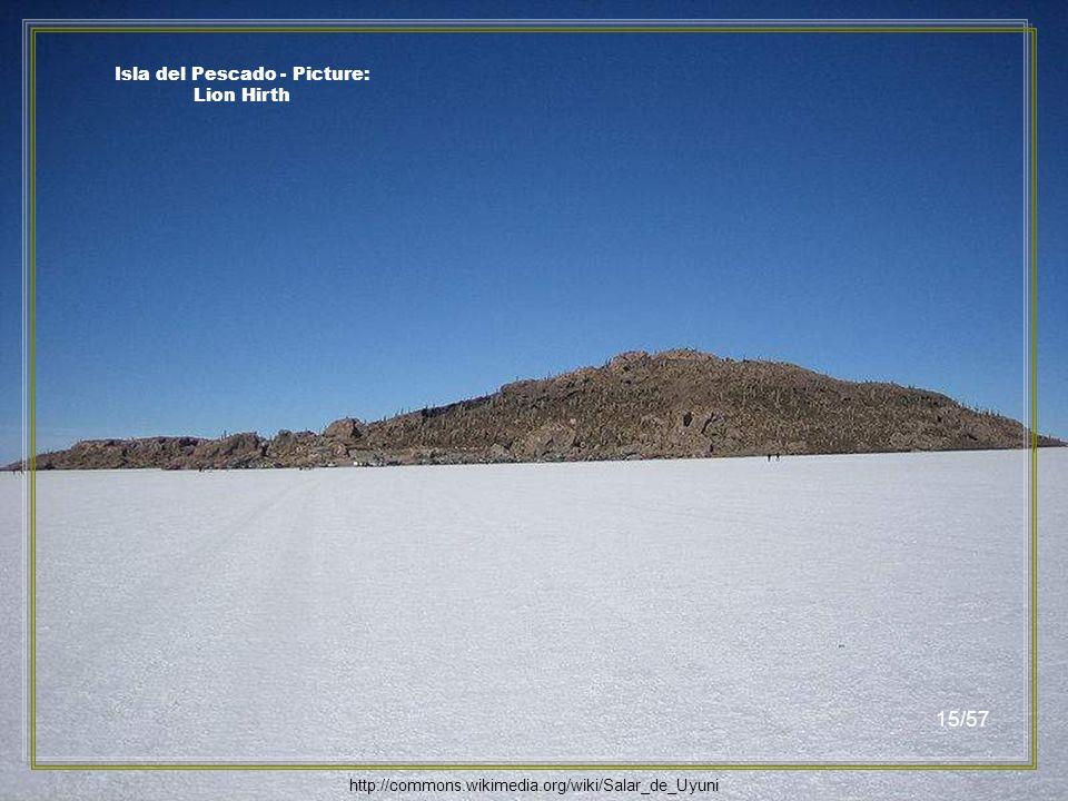 Isla del Pescado - Picture: Shibuyak http://commons.wikimedia.org/wiki/File:Isla_de_Pescado_Uyuni_Bolivia.jpg 14/57