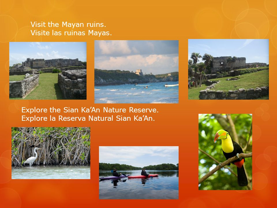 Visit the Mayan ruins. Visite las ruinas Mayas. Explore the Sian Ka'An Nature Reserve. Explore la Reserva Natural Sian Ka'An.