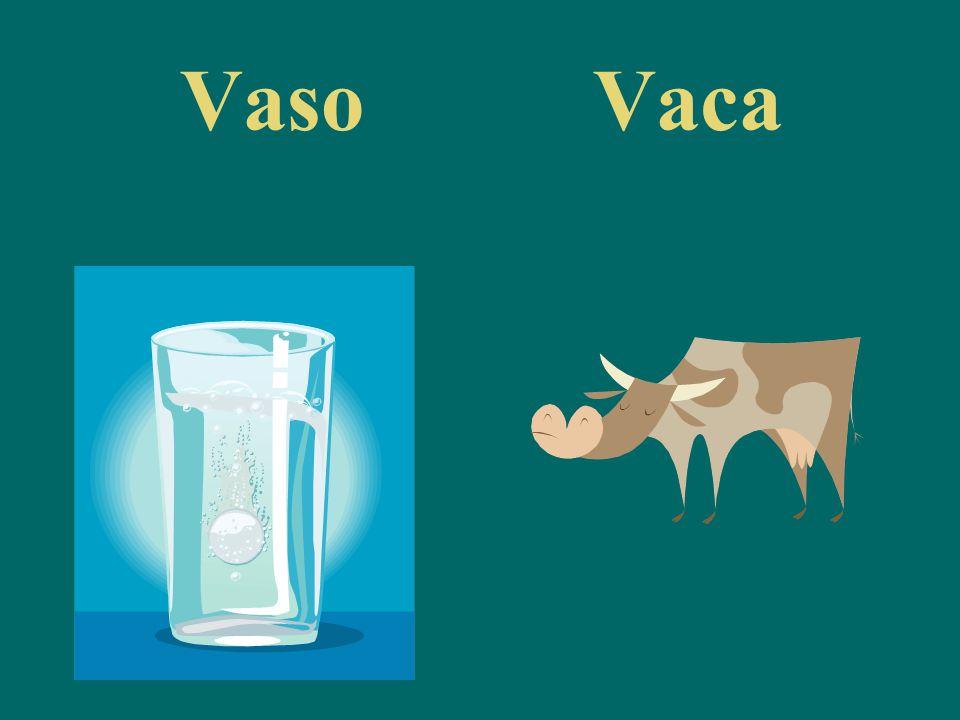 VasoVaca