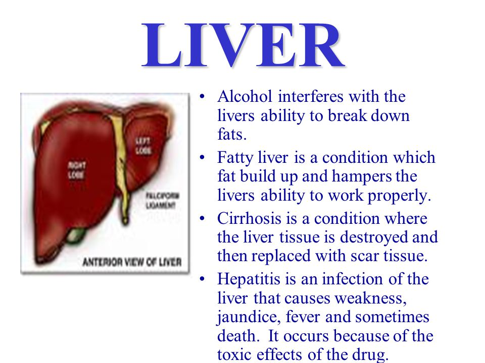 LIVER Alcohol interferes with the livers ability to break down fats.