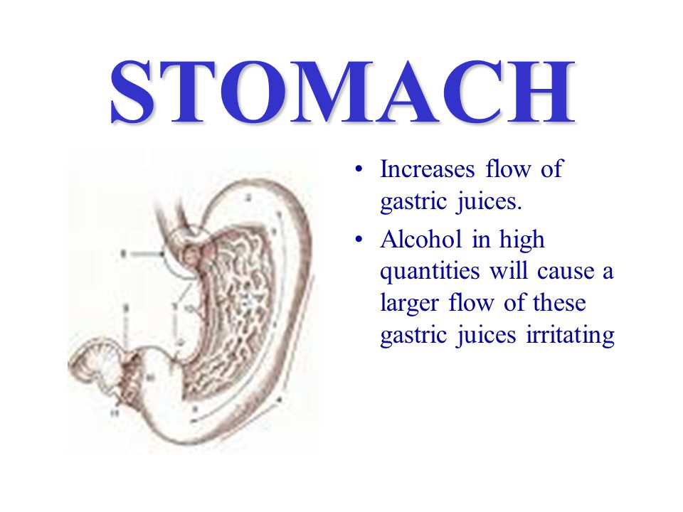 STOMACH Increases flow of gastric juices.