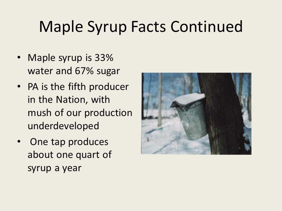 Maple Syrup Facts Continued Maple syrup is 33% water and 67% sugar PA is the fifth producer in the Nation, with mush of our production underdeveloped One tap produces about one quart of syrup a year