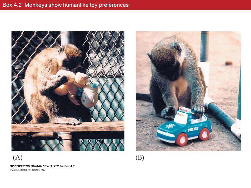 Box 4.2 Monkeys show humanlike toy preferences