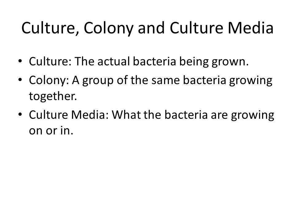 Culture, Colony and Culture Media Culture: The actual bacteria being grown.