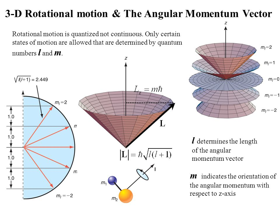 18_16fig_PChem.jpg 3-D Rotational motion & The Angular Momentum Vector m indicates the orientation of the angular momentum with respect to z-axis l determines the length of the angular momentum vector Rotational motion is quantized not continuous.