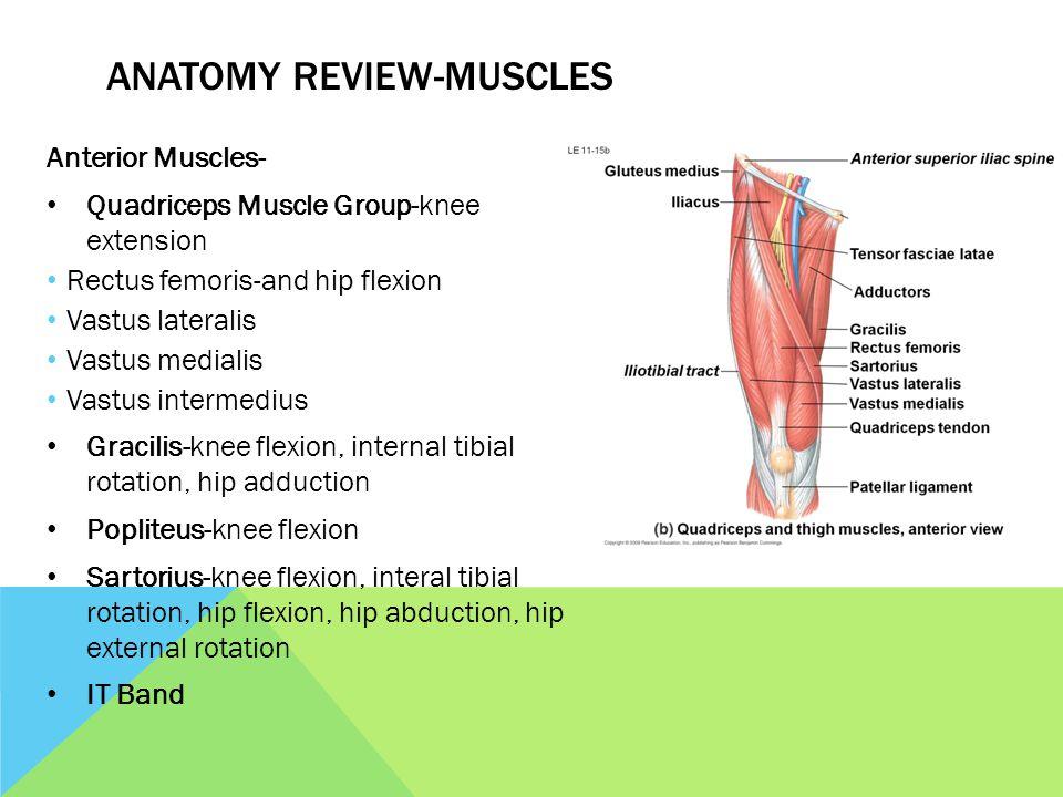 Evaluation The Knee Ms Bowman Anatomy Review Bones Femur Tibia