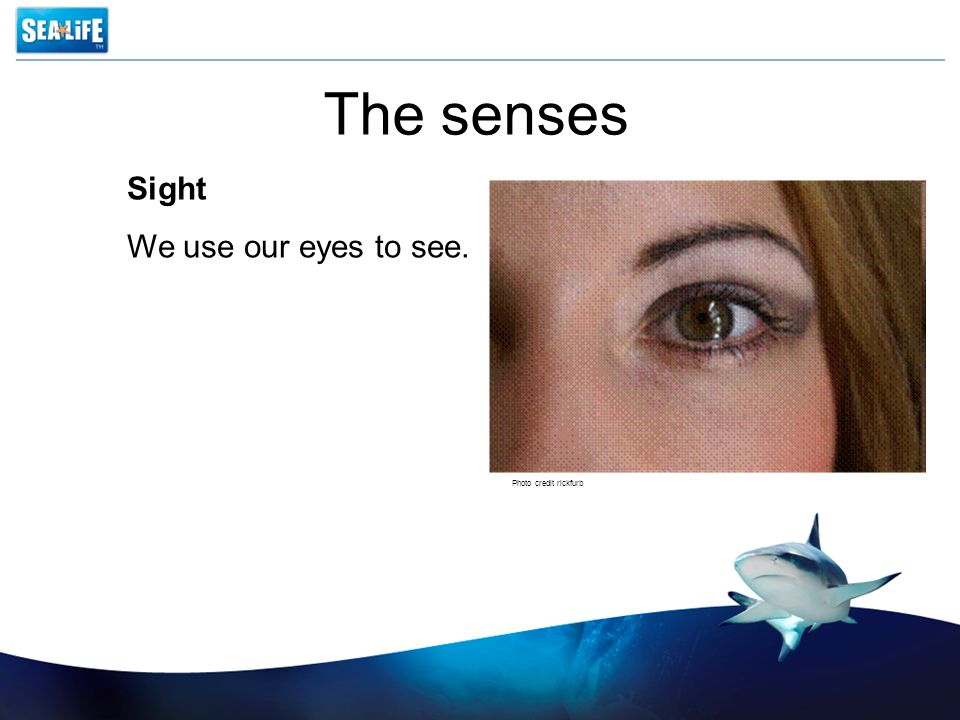 The senses Sight We use our eyes to see. Photo credit rickfurb