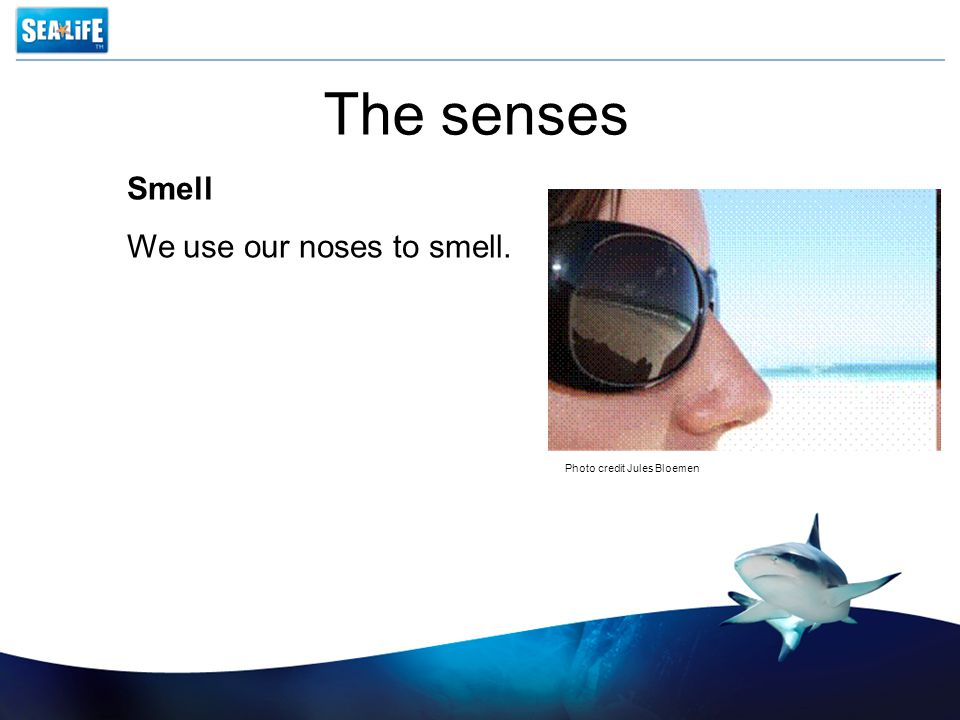 The senses Smell We use our noses to smell. Photo credit Jules Bloemen