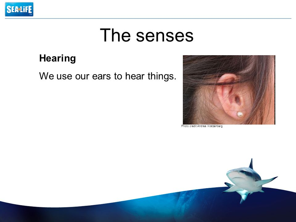 The senses Hearing We use our ears to hear things. Photo credit Andrea Kratzenberg