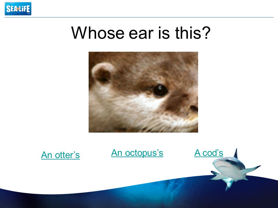 Whose ear is this An otter's An octopus'sA cod's