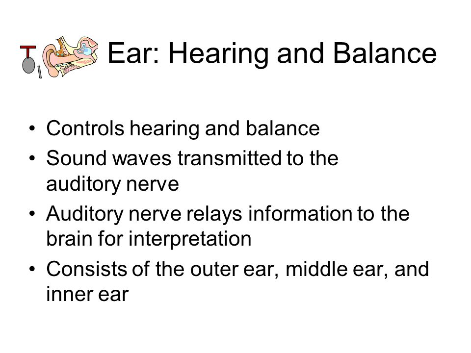 Worksheets The Ear Hearing And Balance Worksheet Answers turn to chapter 8 special senses complete the worksheet i see ear hearing and balance controls sound waves transmitted auditory