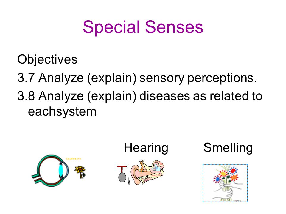 Chapter 8 Special Senses Worksheet Answers Delibertad – Special Senses Worksheet