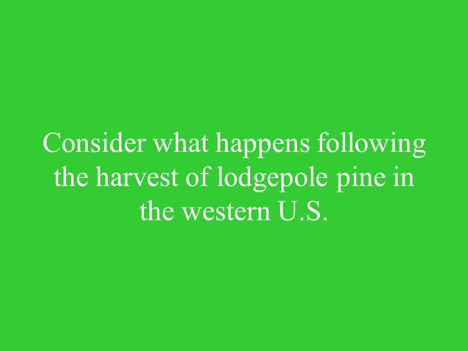 Consider what happens following the harvest of lodgepole pine in the western U.S.