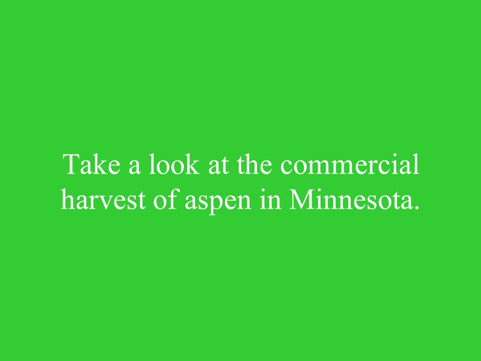 Take a look at the commercial harvest of aspen in Minnesota.