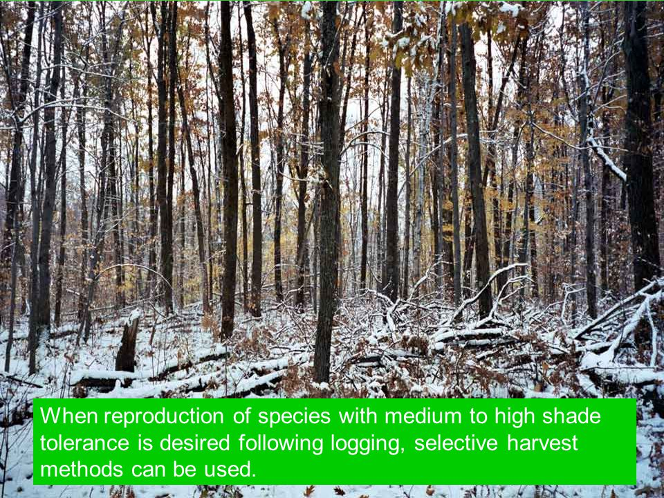 When reproduction of species with medium to high shade tolerance is desired following logging, selective harvest methods can be used.