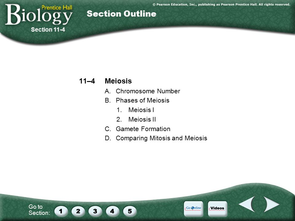 Go to Section: 11–4Meiosis A.Chromosome Number B.Phases of Meiosis 1.Meiosis I 2.Meiosis II C.Gamete Formation D.Comparing Mitosis and Meiosis Section 11-4 Section Outline