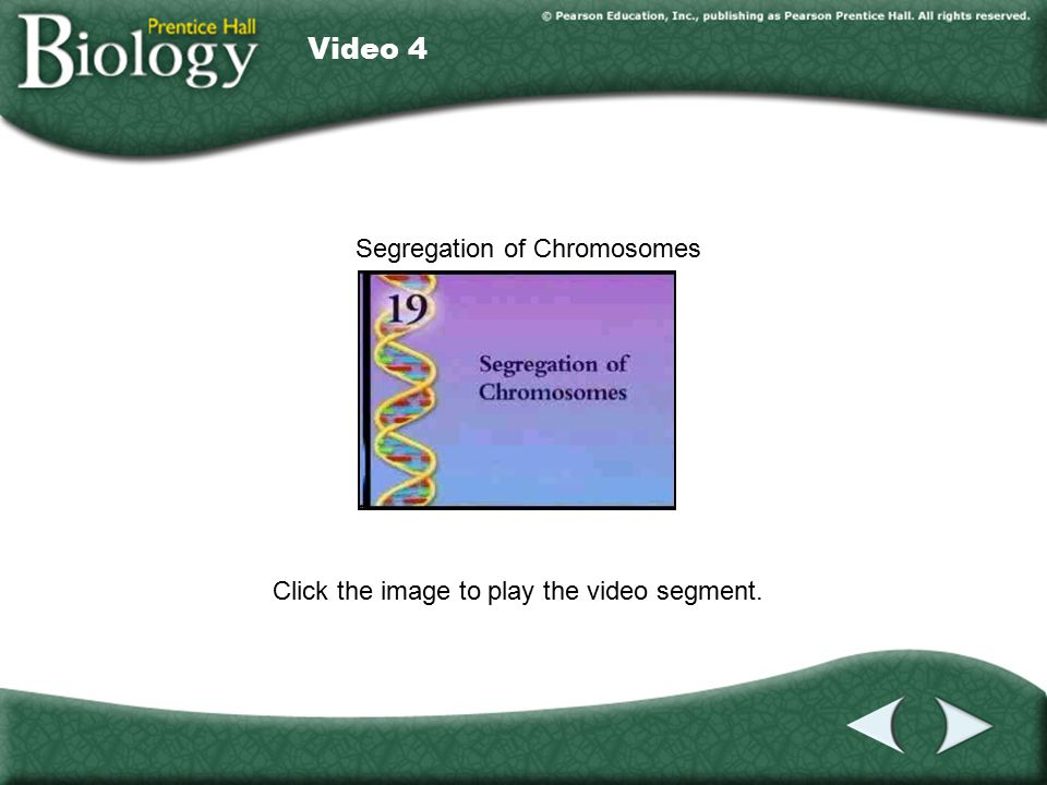 Video 4 Click the image to play the video segment. Video 4 Segregation of Chromosomes