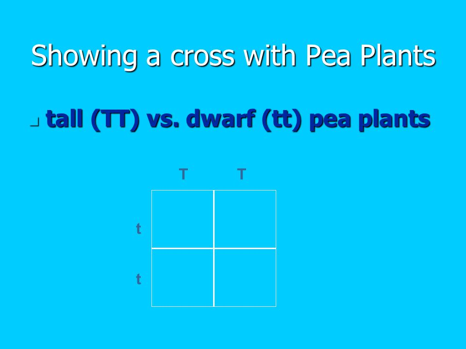 Showing a cross with Pea Plants tall (TT) vs. dwarf (tt) pea plants tall (TT) vs.
