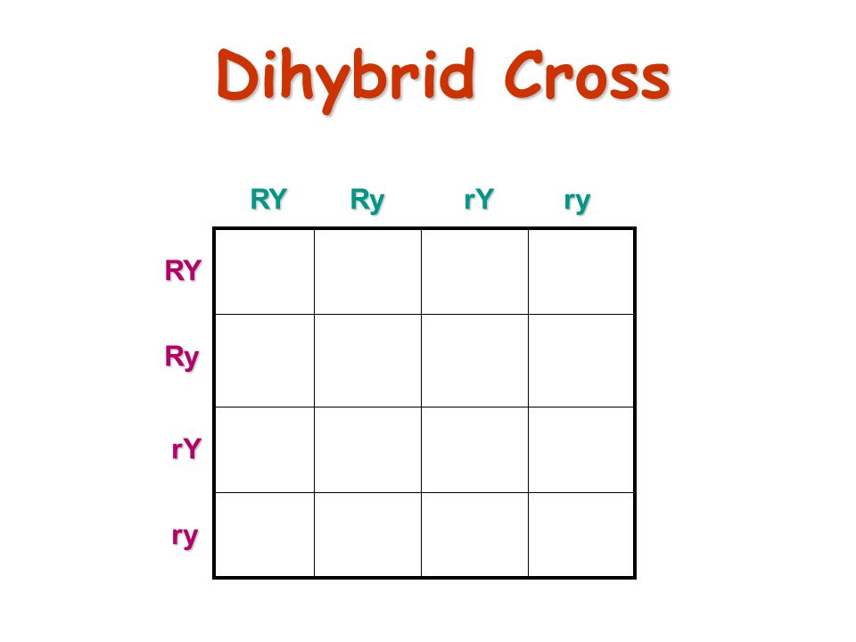 26 Dihybrid Cross Traits: Seed shape & Seed color Alleles: Alleles: R round r wrinkled Y yellow y green RrYy x RrYy RY Ry rY ry All possible gamete combinations