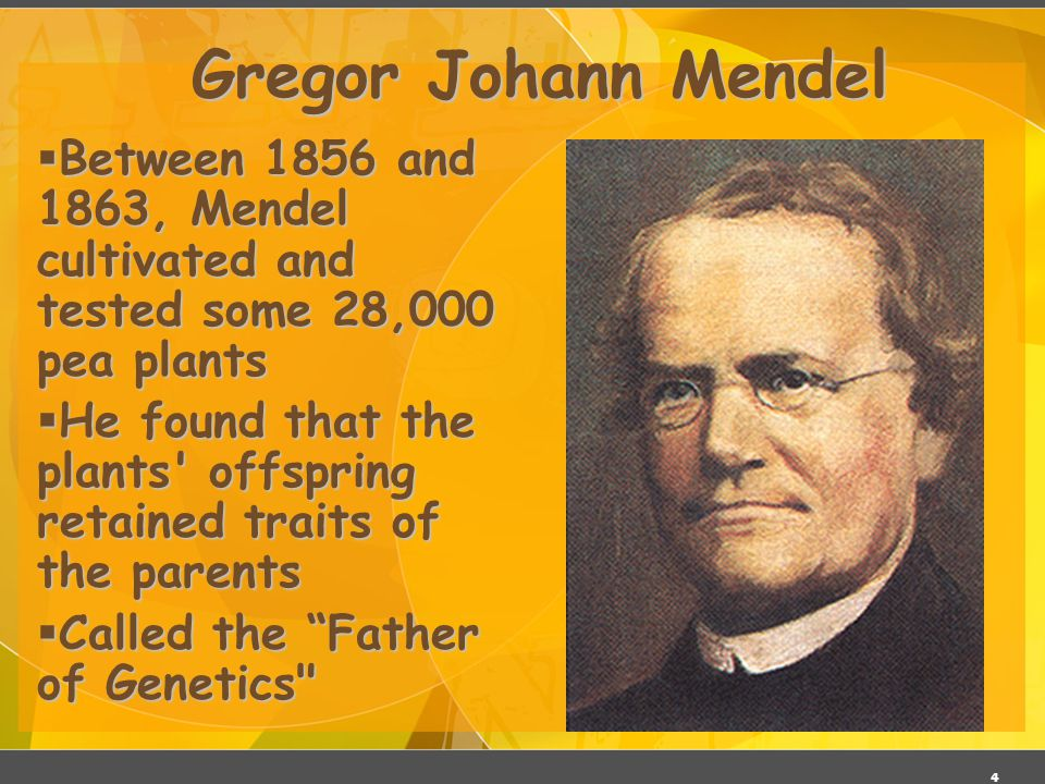 3 Gregor Johann Mendel  Austrian monk  Studied the inheritance of traits in pea plants  Developed the laws of inheritance  Mendel s work was not recognized until the turn of the 20th century