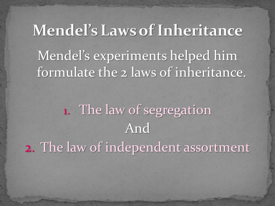 Mendel's experiments helped him formulate the 2 laws of inheritance.