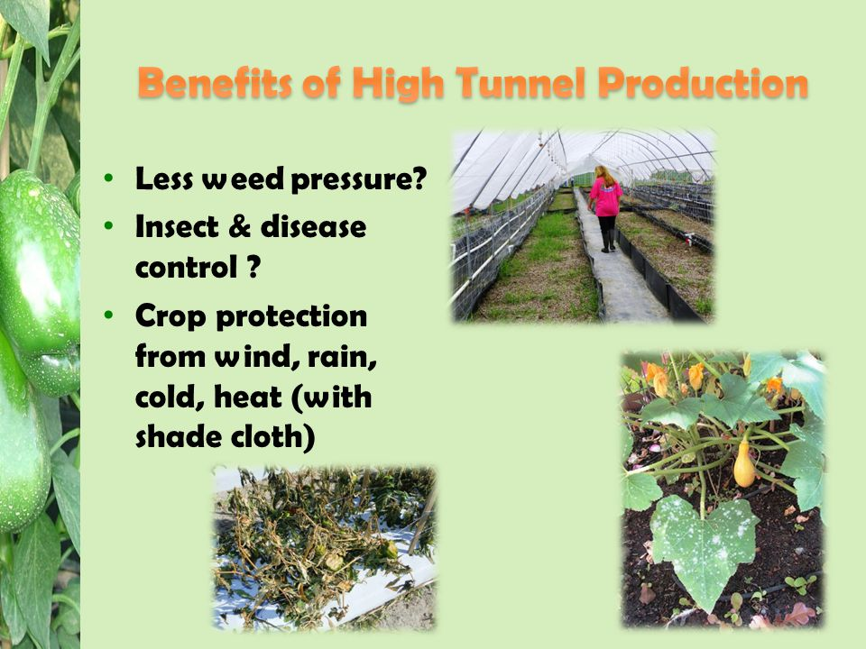 Less weed pressure. Insect & disease control .
