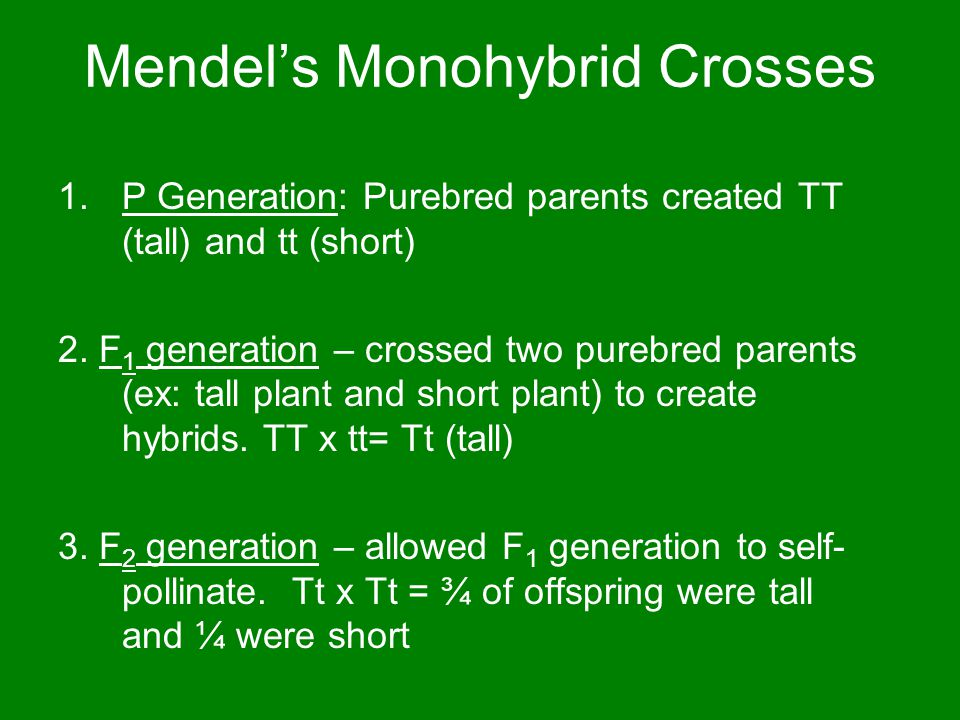 Mendel's Monohybrid Crosses 1.P Generation: Purebred parents created TT (tall) and tt (short) 2.
