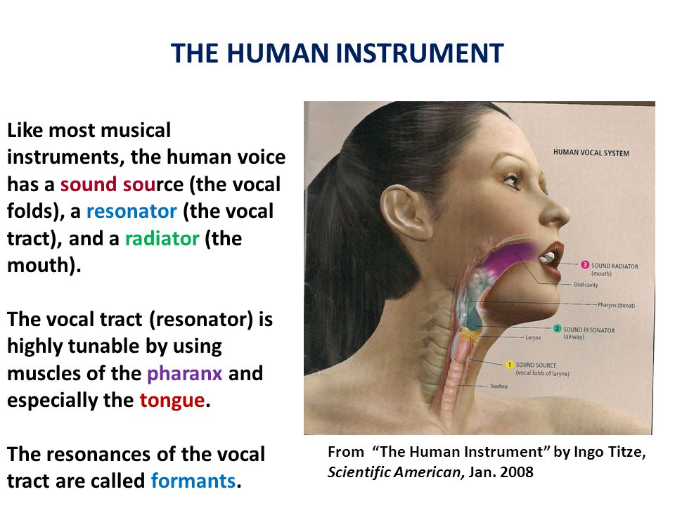 THE HUMAN INSTRUMENT Like most musical instruments, the human voice has a sound source (the vocal folds), a resonator (the vocal tract), and a radiator (the mouth).