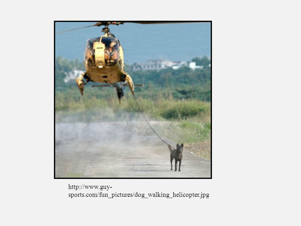 sports.com/fun_pictures/dog_walking_helicopter.jpg