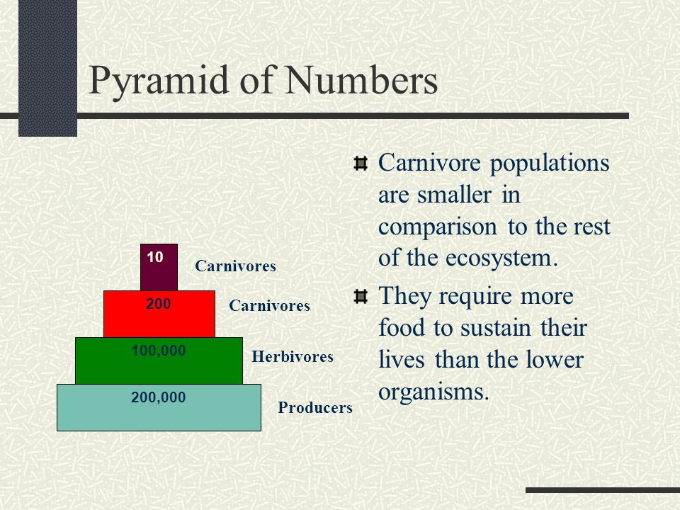 Pyramid of Numbers Carnivore populations are smaller in comparison to the rest of the ecosystem.
