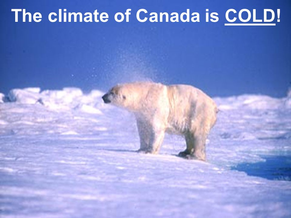  The cold climate of Canada… The climate of Canada is COLD!