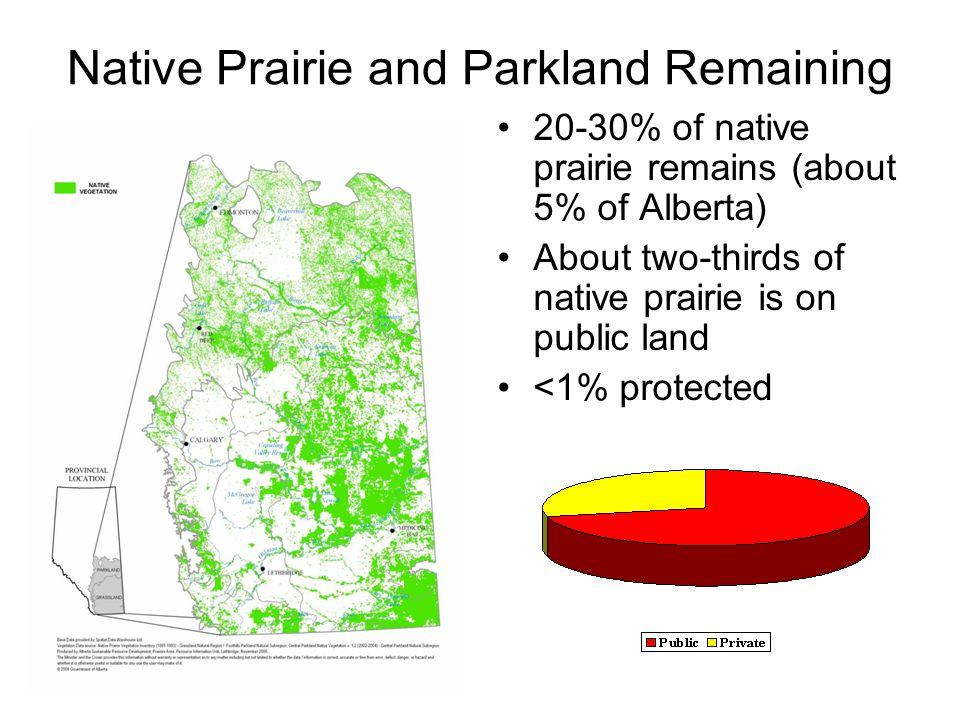 Native Prairie and Parkland Remaining 20-30% of native prairie remains (about 5% of Alberta) About two-thirds of native prairie is on public land <1% protected