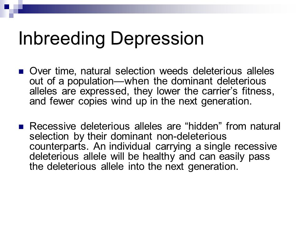 Inbreeding Depression Over time, natural selection weeds deleterious alleles out of a population—when the dominant deleterious alleles are expressed, they lower the carrier's fitness, and fewer copies wind up in the next generation.
