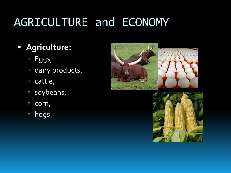 AGRICULTURE and ECONOMY AAgriculture: EEggs, ddairy products, ccattle, ssoybeans, ccorn, hhogs