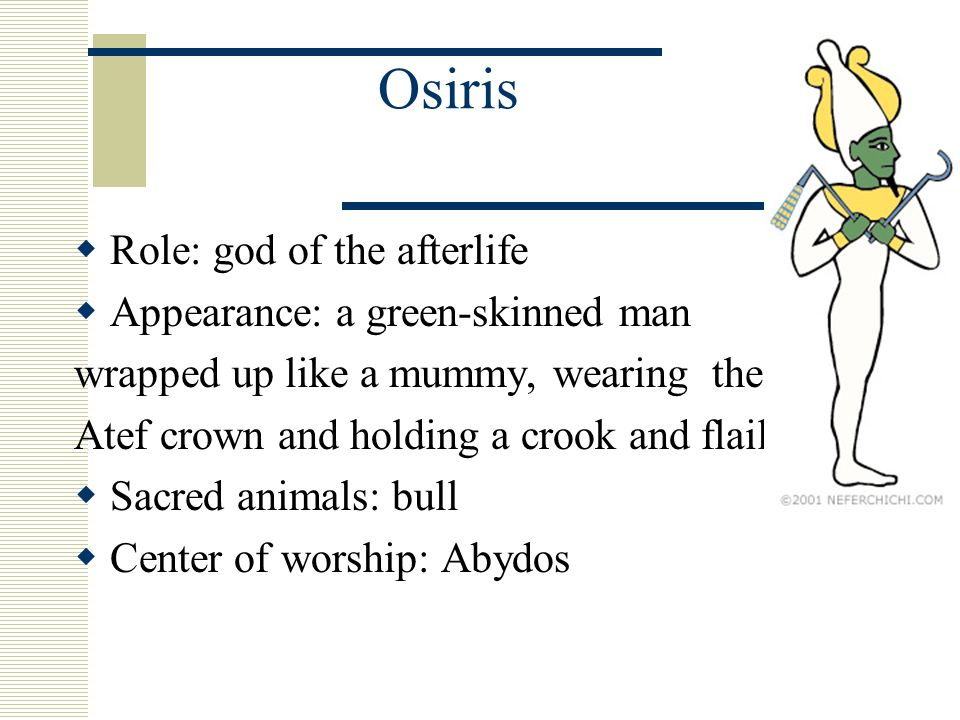 Osiris  Role: god of the afterlife  Appearance: a green-skinned man wrapped up like a mummy, wearing the Atef crown and holding a crook and flail  Sacred animals: bull  Center of worship: Abydos