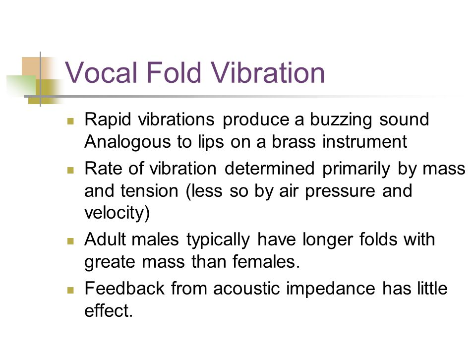 Vocal Fold Vibration Rapid vibrations produce a buzzing sound Analogous to lips on a brass instrument Rate of vibration determined primarily by mass and tension (less so by air pressure and velocity) Adult males typically have longer folds with greate mass than females.