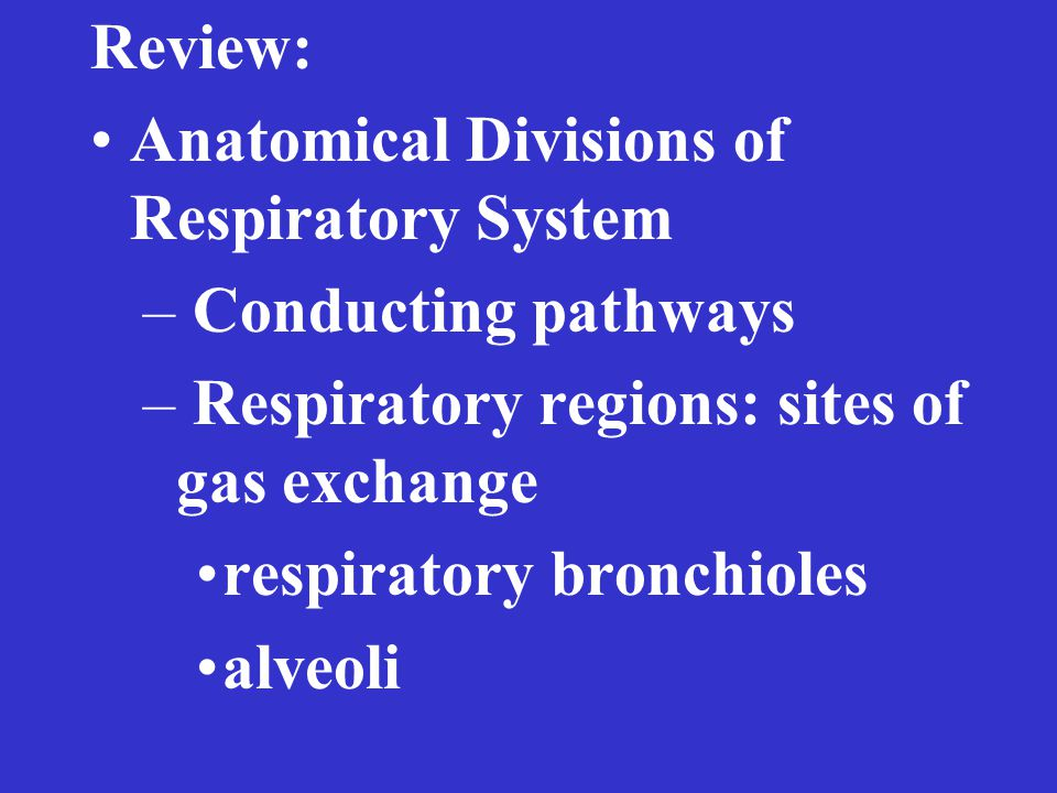 Review: Anatomical Divisions of Respiratory System – Conducting pathways – Respiratory regions: sites of gas exchange respiratory bronchioles alveoli
