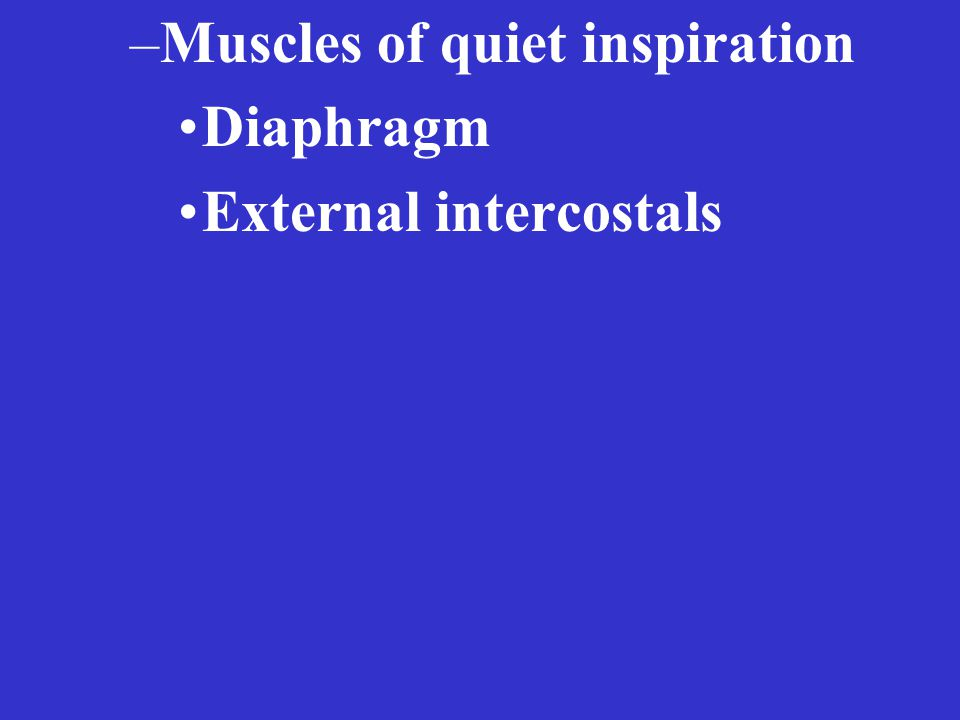 –Muscles of quiet inspiration Diaphragm External intercostals