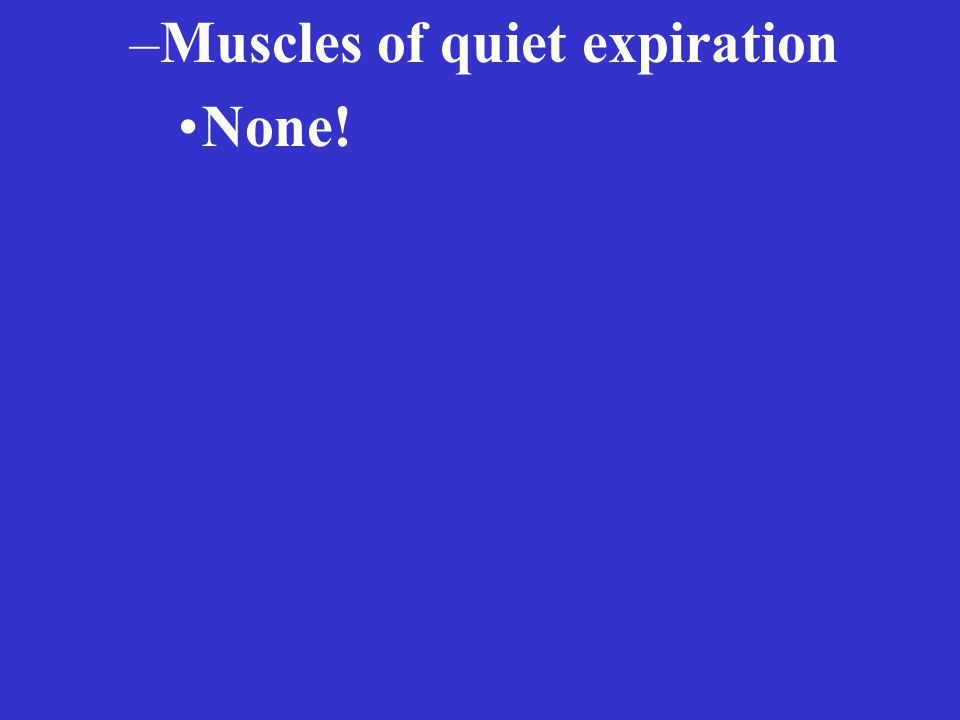 –Muscles of quiet expiration None!