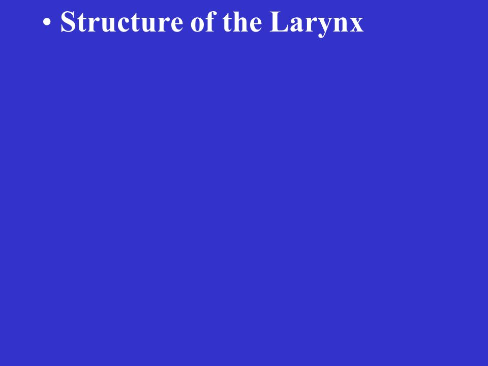 Structure of the Larynx