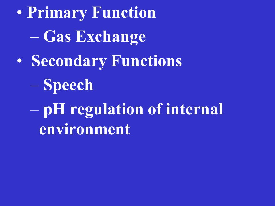 Primary Function – Gas Exchange Secondary Functions – Speech – pH regulation of internal environment