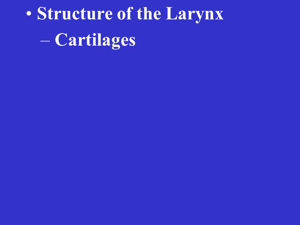 Structure of the Larynx – Cartilages