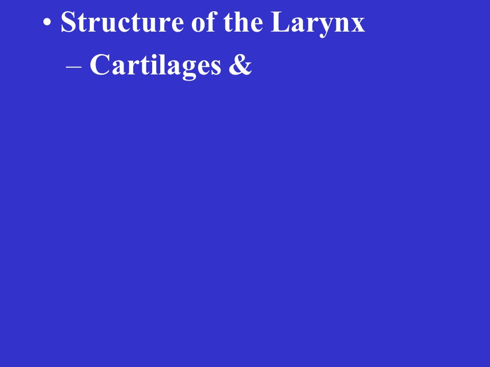 Structure of the Larynx – Cartilages &