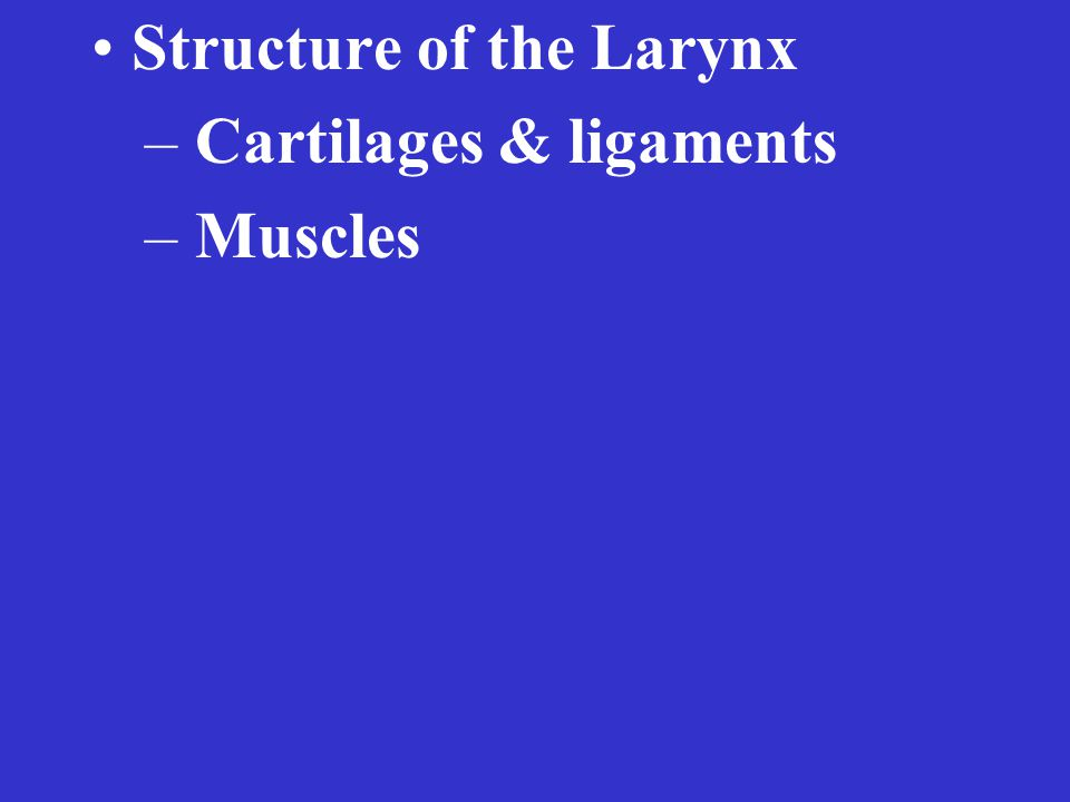Structure of the Larynx – Cartilages & ligaments – Muscles