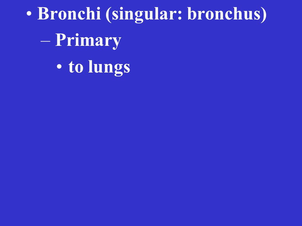Bronchi (singular: bronchus) – Primary to lungs